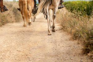 Rutes amb cavall | Tivissa
